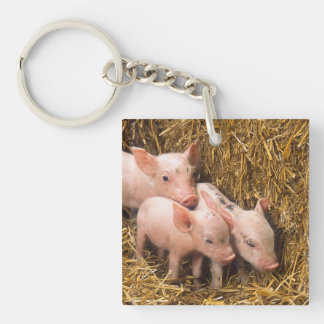 Three Little Pigs Single-Sided Square Acrylic Keychain