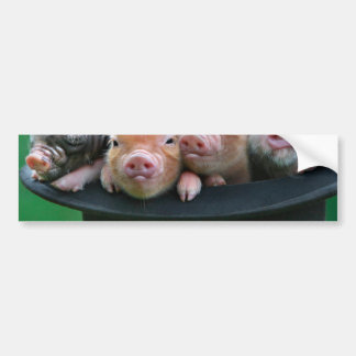 Three little pigs - three pigs - pig hat bumper sticker
