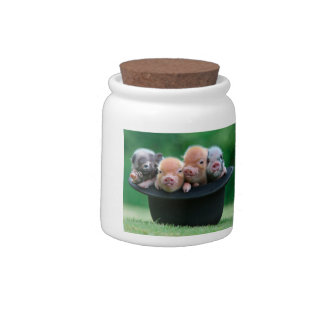 Three little pigs - three pigs - pig hat candy jars