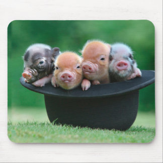 Three little pigs - three pigs - pig hat mouse pad