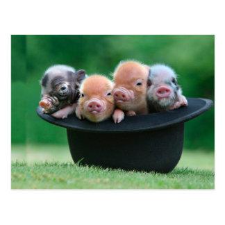 Three little pigs - three pigs - pig hat postcard