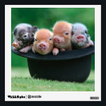 "Three little pigs - three pigs - pig hat wall sticker<br><div class=""desc"">pig , piglet , piggy , &quot;baby pig&quot; , &quot;3 little pigs &quot;, porker , &quot;little pig &quot;, pigling , &quot;baby pig hat&quot; , &quot;hat pig &quot;</div>"