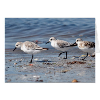 Three little stints at Quiberon in France Card