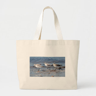 Three little stints at Quiberon in France Large Tote Bag