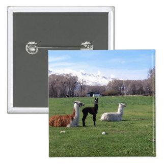 Three Llamas In Field Buttons