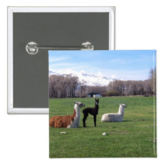 Three Llamas In Field Pinback Button