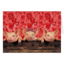 Three lovely valentine pigs card