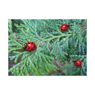 Three lucky heart spot ladybugs on pine bush canvas print