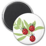 Three Lucky Ladybugs Refrigerator Magnet