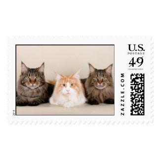 Three Maine Coon Cats Postage Stamp