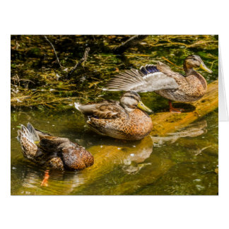 Three Mallard Hens - Ducks - Wildlife - Birds Large Greeting Card