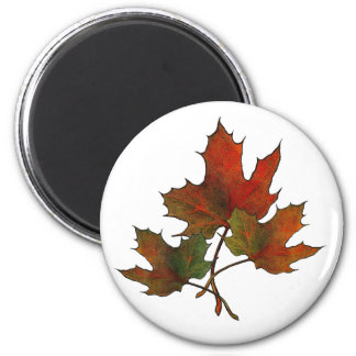 Three Maple Leaves in Autumn: Realism Art 2 Inch Round Magnet