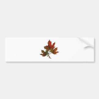 Three Maple Leaves in Autumn: Realism Art Bumper Sticker