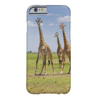 three Masai giraffes, Giraffa camelopardalis Barely There iPhone 6 Case