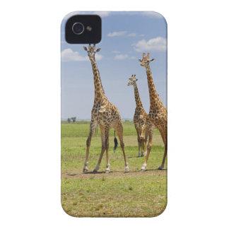 three Masai giraffes, Giraffa camelopardalis iPhone 4 Cover