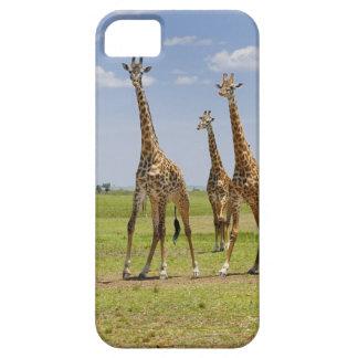 three Masai giraffes, Giraffa camelopardalis iPhone SE/5/5s Case