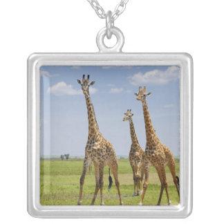 three Masai giraffes, Giraffa camelopardalis Custom Jewelry