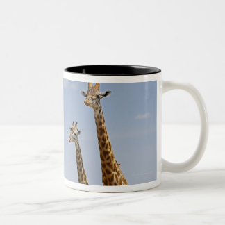 three Masai giraffes, Giraffa camelopardalis Two-Tone Coffee Mug