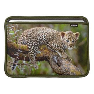 Three Month Old Leopard Panthera Pardus Cub MacBook Sleeves