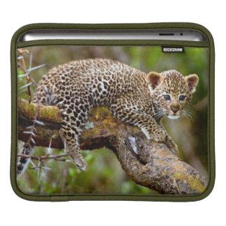 Three Month Old Leopard (Panthera Pardus) Cub iPad Sleeve