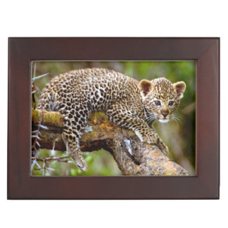 Three Month Old Leopard (Panthera Pardus) Cub Keepsake Boxes