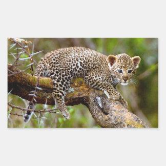Three Month Old Leopard (Panthera Pardus) Cub Rectangular Sticker