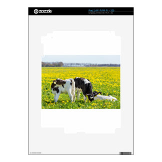 Three newborn calfs in spring dandelions meadow skins for the iPad 2