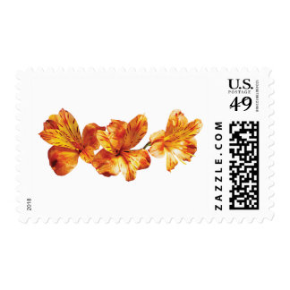 Three Orange Asiatic Lilies Postage
