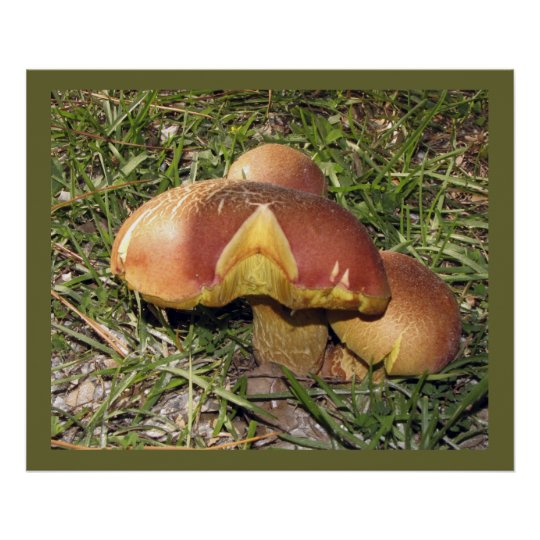 Three orange mushrooms poster