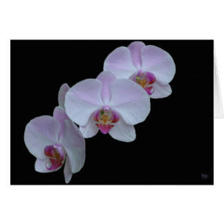 Three Orchid Greeting Cards