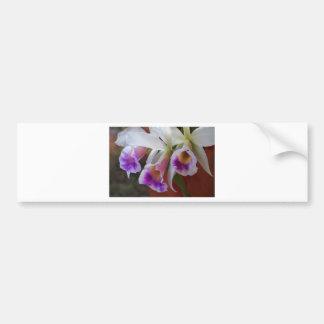 Three Orchids - Beautiful Flowers Car Bumper Sticker