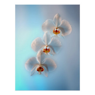 Three orchids posters