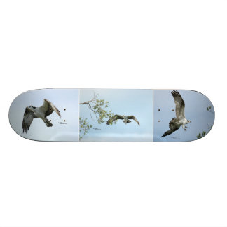 Three Osprey Images Skateboard