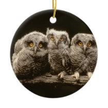Three Owl Chicks Ceramic Ornament