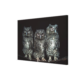 three owls stretched canvas print