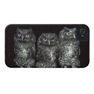 three owls Case-Mate iPhone 4 cases