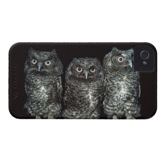 three owls iPhone 4 cover
