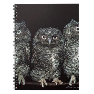 three owls notebooks