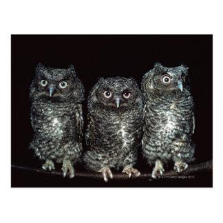 three owls postcard