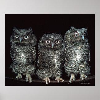 three owls print