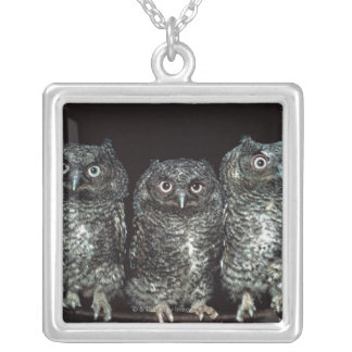 three owls silver plated necklace