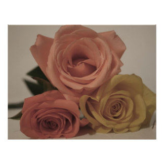 three pale roses Colored in vintage shades Flyer Design