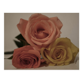 three pale roses Colored in vintage shades Post Cards