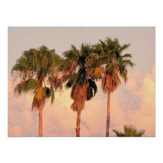 Three Palm Trees Bathed in Warm Sunset Print