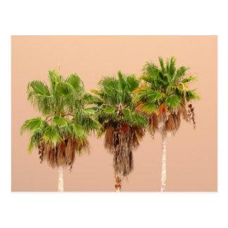 Three Palms Before the Storm Postcard
