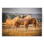 Three Palomino Ponies Card