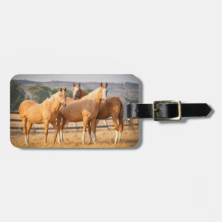 Three Palomino Ponies Tags For Luggage