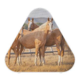 Three Palomino Ponies Speaker