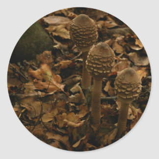 Three parasol mushrooms in the forest 2 classic round sticker