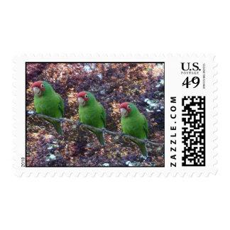 Three parrots postage stamp